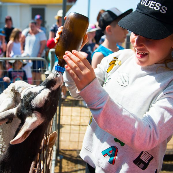 Girl wearing a gray sweater and black cap feeding a goat with milk
