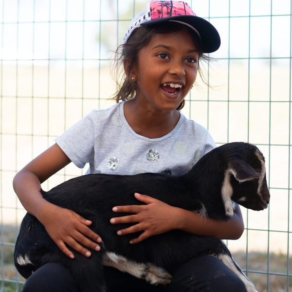 Smiling little girl holding a goat like a baby